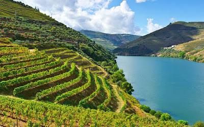 vigne douro portogallo