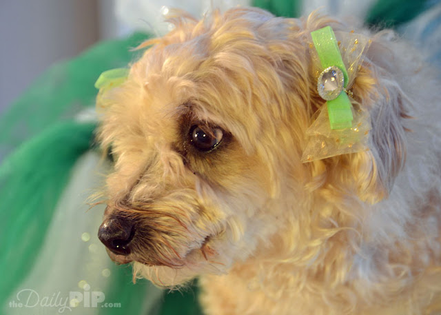 Ruby wears her finest green dog bow for St. Paddy's Day