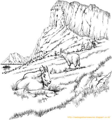 Mewarnai Gambar Pemandangan Alam 9