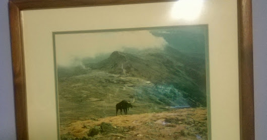 Mystical Moose of Mt. Washington