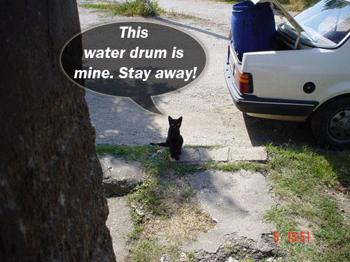 A Cat Guarding The Water Drum