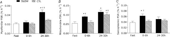 Repetitions-lentes-ou-rapides-et-croissance-musculaire