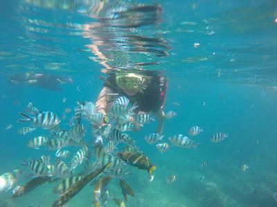 Review Fujitsu F-04G : Berenang di Laut - Archi Materiali