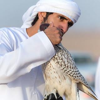 Foto em fundo desfocado. Em foco, Sheikh Hamdan abraça com a mão direita um falcão com capuz marrom. Hamdan é um homem jovem, pele branca, rosto anguloso, sobrancelha reta e espessa, olhos amendoados castanhos escuros, nariz avantajado adunco; usa turbante e dishdasha(espécie de túnica larga e longa) alvíssimos. O falcão tem porte médio, plumagem creme densa, dorso rajado de marrom claro formando uma estampa que remete a pequenas folhas finalizando na cauda em geometrias retangulares, no peito e ventre, uma chuva de pingos marrons que decrescem em quantidade próximos as garras.