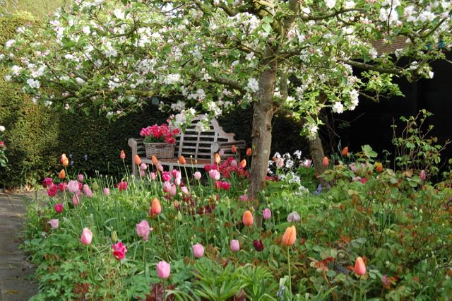 apple blossom, bench, tulips,