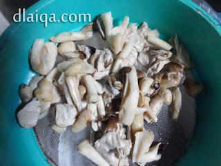 siapkan kulat (jamur) sawit