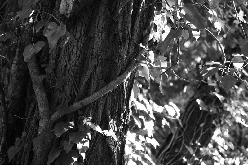 Gli alberi lungo il sentiero della cascata delle Marmore