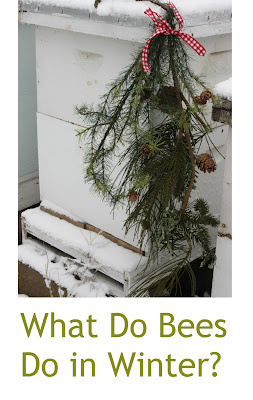 winter beekeeping