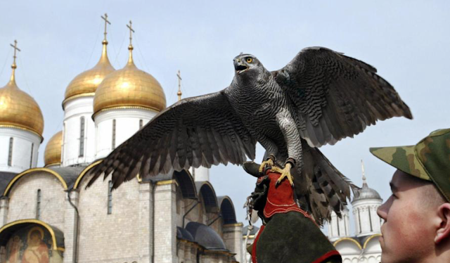 FALCON CRAZY Vladimir Putin uses trained birds of prey to take down drones sent by spies or ISIS and guard his Kremlin HQ