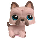 Littlest Pet Shop Small Playset Scottie (#1201) Pet