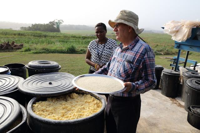 Peter Kulakow showing garri and fermenting cassava