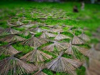 manfaat-lidi-kelapa-sawit.jpg