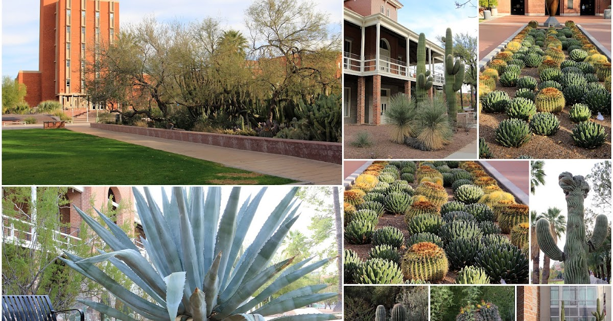 succulents and more arizona 2016 day 4 krutch cactus garden and civano tucson asu. Black Bedroom Furniture Sets. Home Design Ideas
