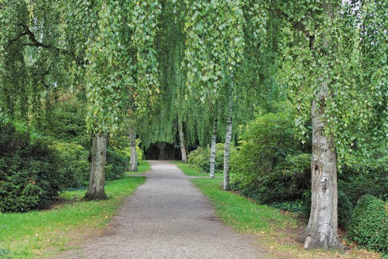 Promenade dans le cimetière et parc d'Assistens Kirkegård à Copenhague