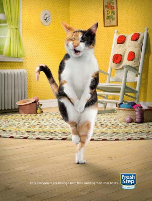 Desodorante para cajas de gato.