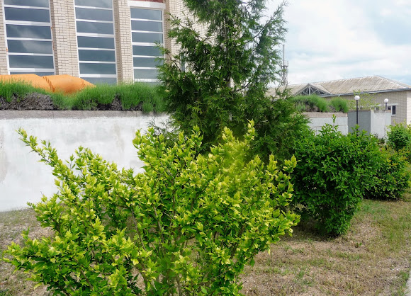 Арабатська стрілка. Парк пансіонату «Сокіл»