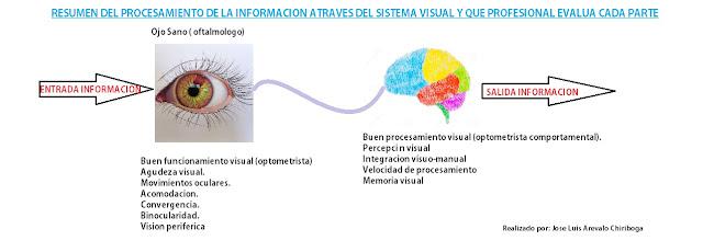Entrada Información Ojo Cerebro Salida Información