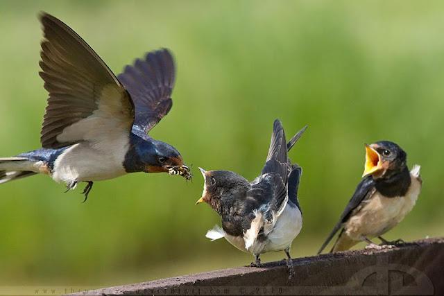 Tidak Yakin Dengan Rezeki Allah? Burung Ini Ajarkan Cara Bertawakal
