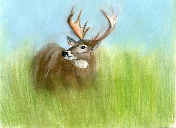 Deer Oil Pastel Paintings