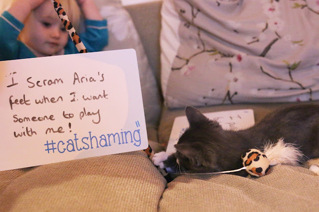 #catshaming kitten with cat shaming sign i scram my toddler's feet when i want someone to play with me