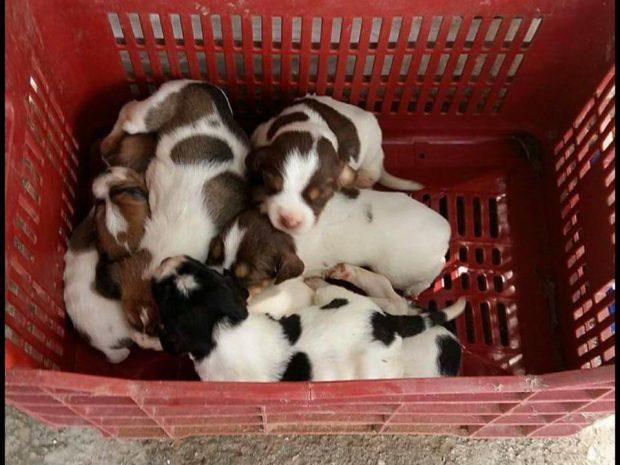 Αργολίδα: Επέστρεψαν σε σκυλίτσα τα κουτάβια της που κάποιος άρπαξε & εγκατέλειψε αβοήθητα