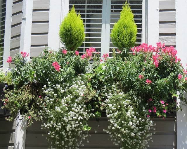 charleston sc window boxes award winning secret gardens tour