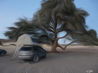 Die kraft der Bäume, the power of trees