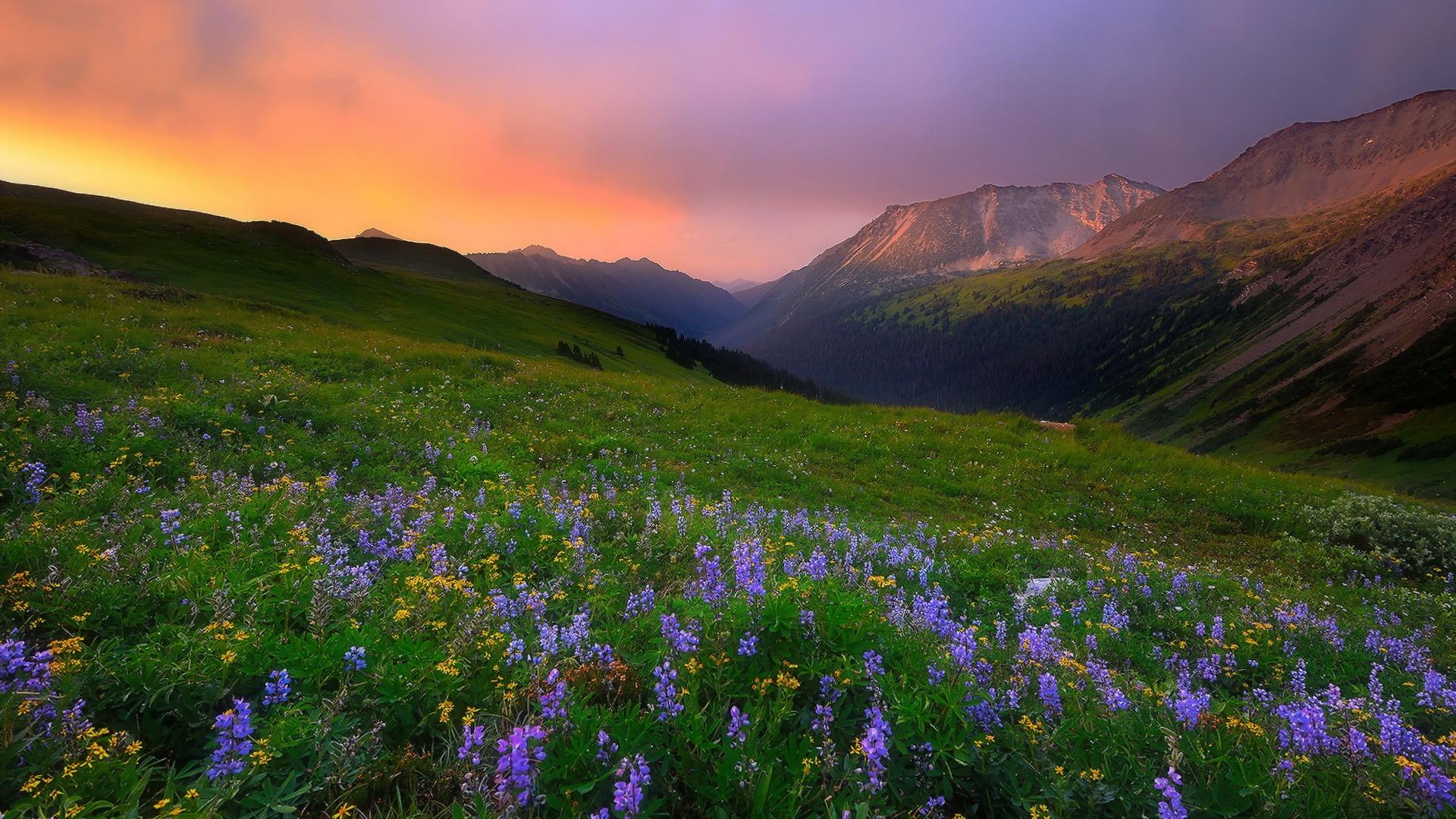 De Flores En La Montana