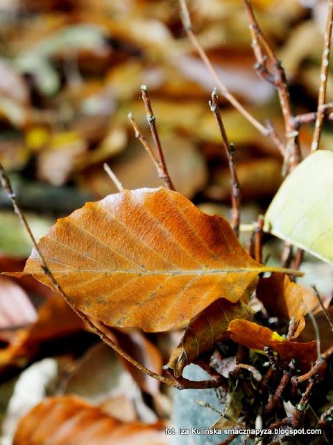 grzybobranie, na grzyby, grzyby gatunkami, kosze pelne grzybow,  jesien