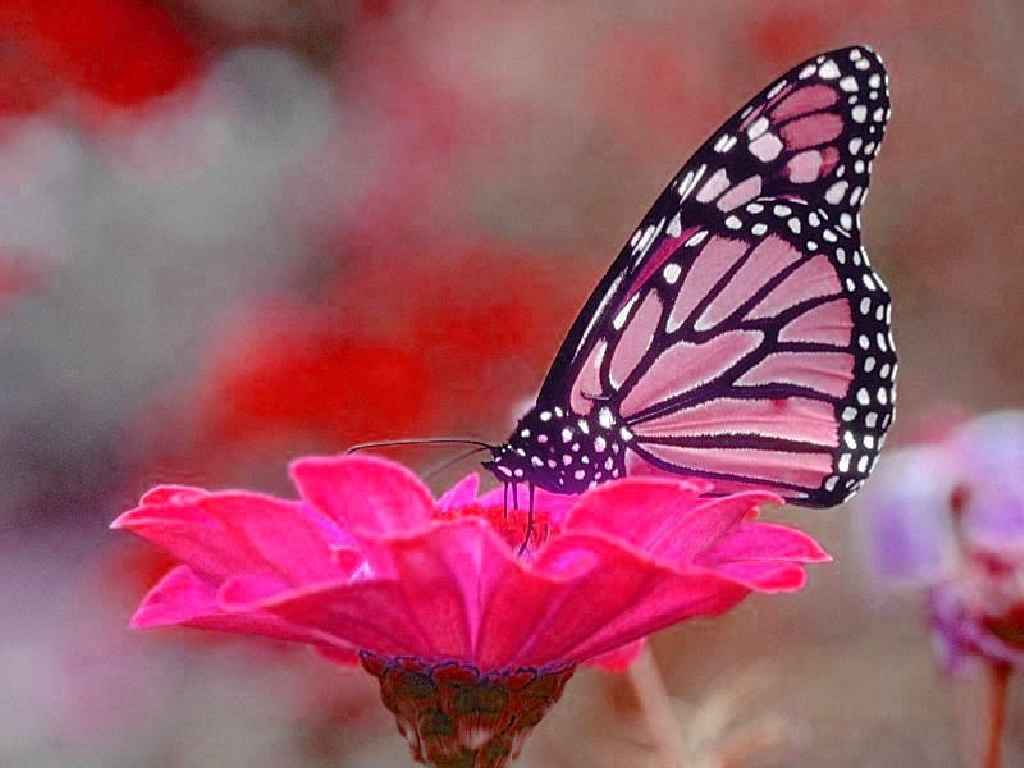 Quotes With Butterflies With Flowers. QuotesGram