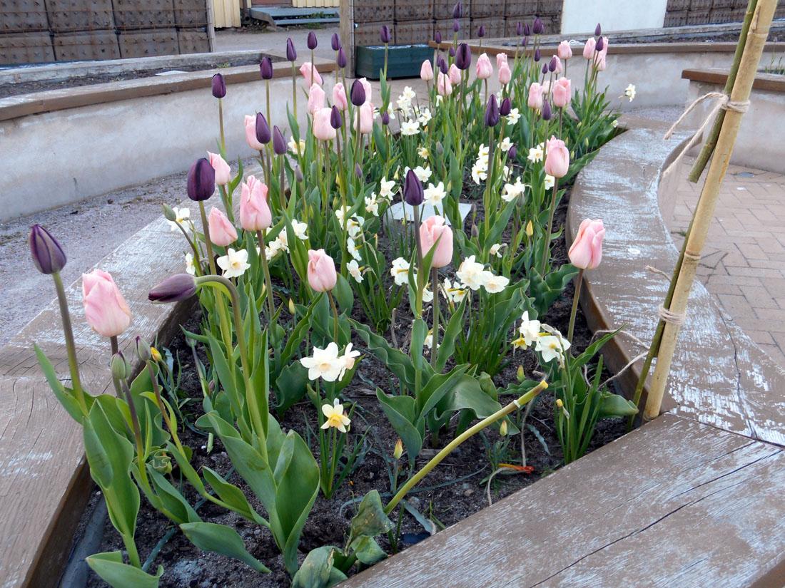 Giardino della salute a Kristianstad