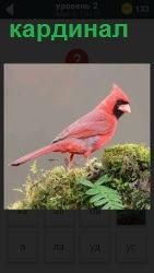ответ на 2 уровень кардинал