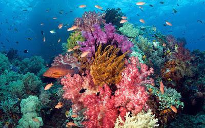 Bunaken Tempat Wisata Terbaik di Indonesia