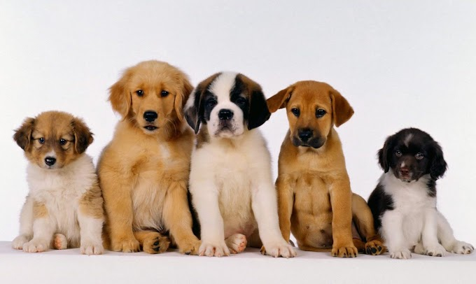 Puppies for Sale: The Truth About the Global Pet Industry