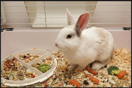 http://www.animalc4re.com/2017/09/best-rabbit-repellent.html