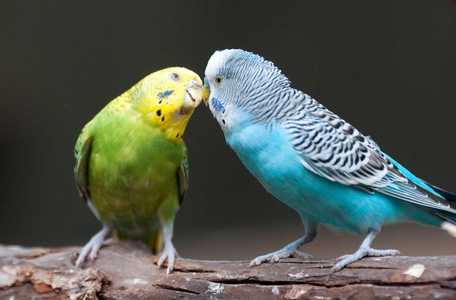 sonhar com passarinho