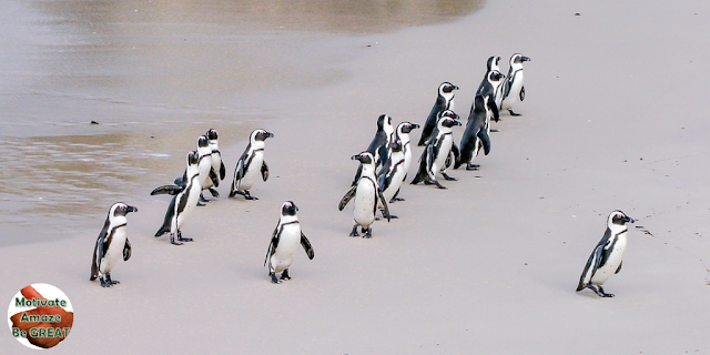 "Header image of the article ""9 Leadership Killers You Should Be Aware Of and Avoid"" - Team of Penguins being mislead by their leader. not fostering repor"