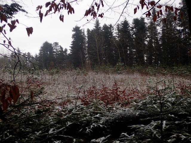 Jesień? W lutym prawie nie było śniegu