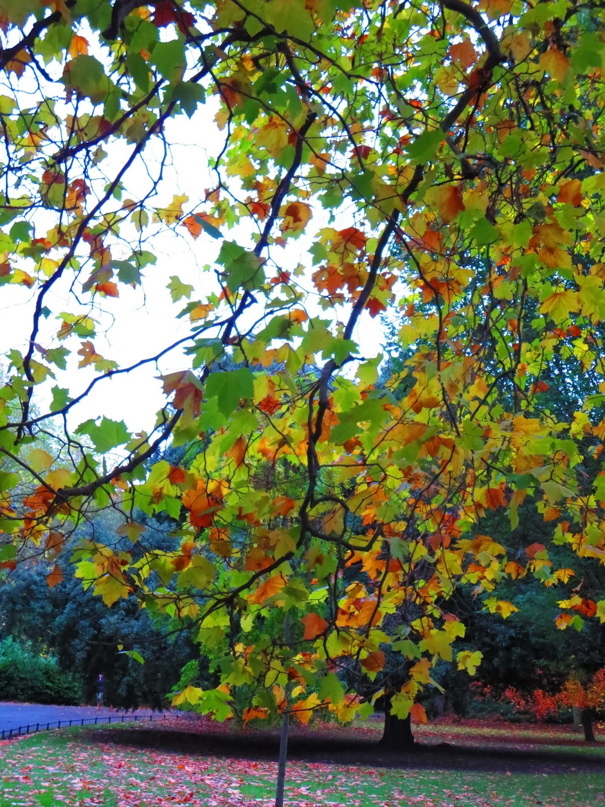 Dublin - Fall Foliage | Sidewalk Safari | Part-time Travel Blog