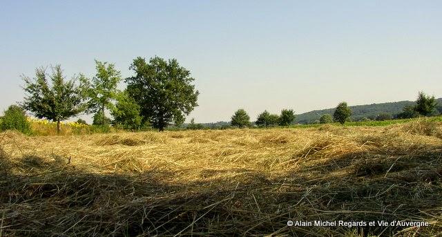 Paysage d'Auvergne, foin