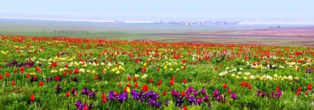 Ландшафт Юга России. Калмыцкая степь