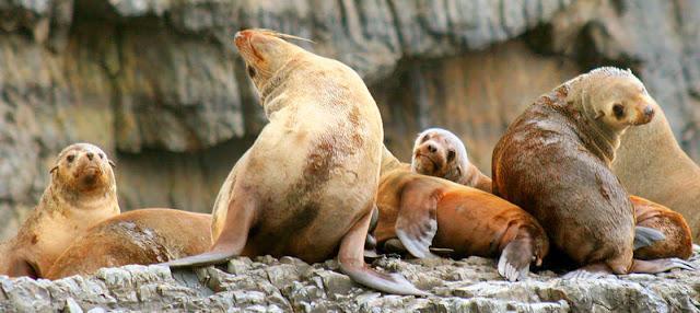 https://tasmaniantravelguide.experienceoz.com.au/en/hobart/tasman-island-wilderness-cruise/3-hour-wilderness-cruise