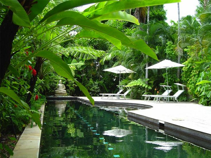 Real World Gardener Tropical Gardens Around The Pool n ...