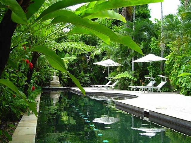 tropical%2Bgardens%2Bby%2Bpool1.jpg