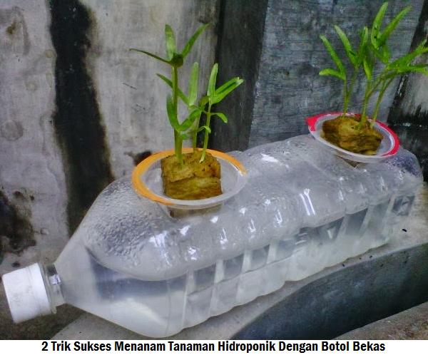 2 Trik Sukses Menanam Tanaman Hidroponik Dengan Botol Bekas