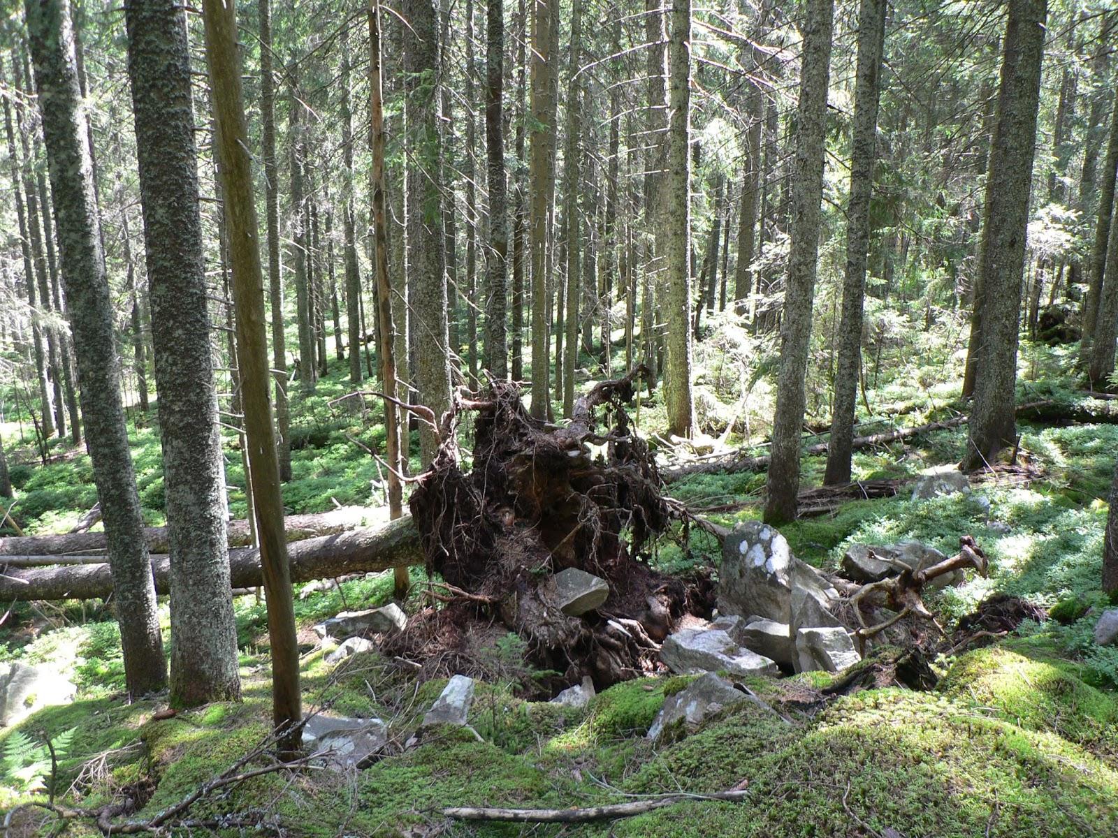 Opasnosti-Lesa
