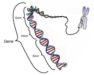 Pengertian Gen dan Sejarahnya