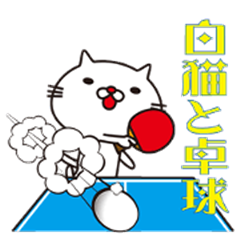 White cat and table tennis
