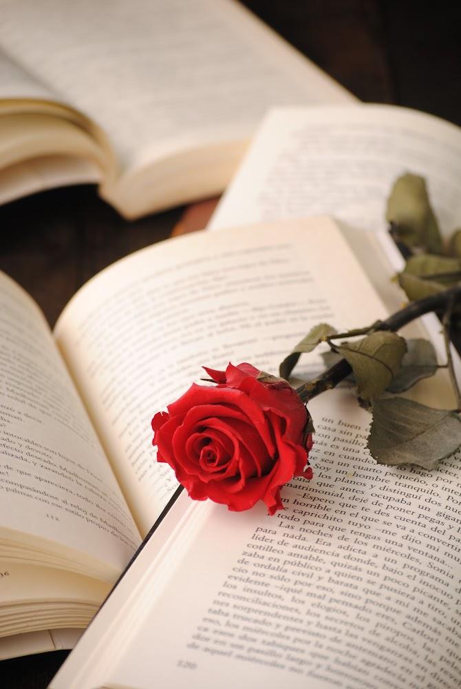 sant jordi rosas libros