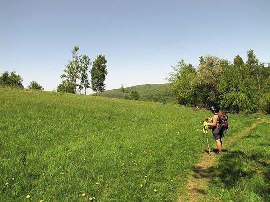 Łąka poprzedzająca podmokłe tereny.